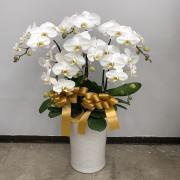 6株高瓷大白花
