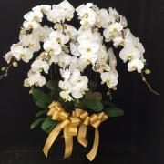 11株高瓷大白花