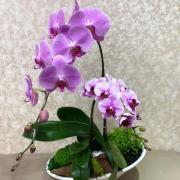2株白瓷粉花
