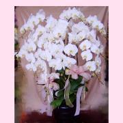 十株白色典雅蘭花盆