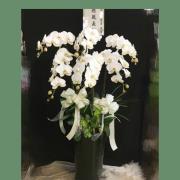 六株白色典雅蘭花盆