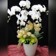 五株白色典雅蘭花盆