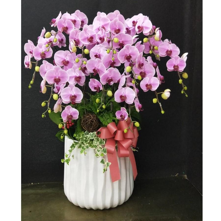 12株白瓷特級粉花